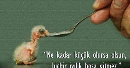 tt_iyilik